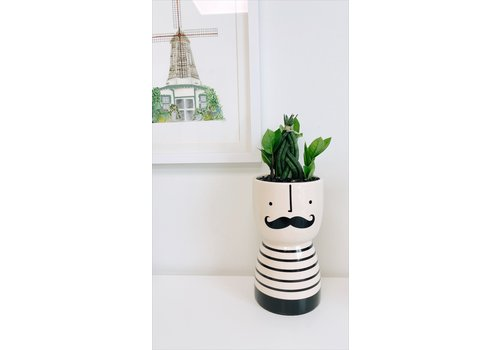 Dutch Growers I Moustache You A Question -Potted Snake + ZZ Plant-