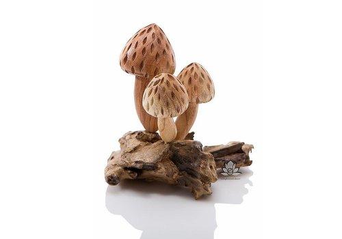 Mushroom Candy Cap