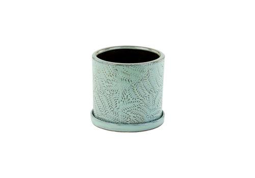 "Ceramic Pot With Saucer Green Fern 4.5"""