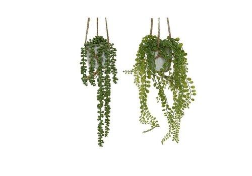 Plant In Hanging Plastic Pot