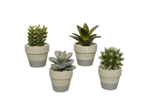 """Succulent In Plastic Pot Assorted 4"""""""