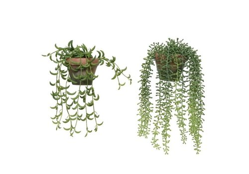 """Plant in Hanging Basket Assorted 13"""""""