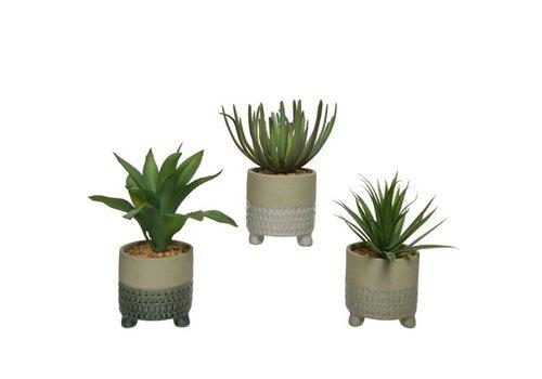 """Succulent In Plastic Pot Assorted 8"""""""