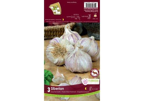 Garlic Siberian Tops