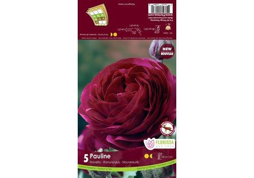 Ranunculus Amandine Pauline