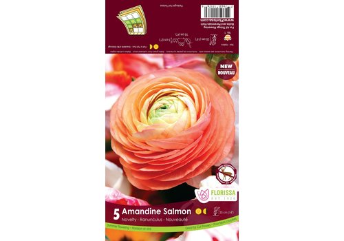 Ranunculus Amandine Salmon