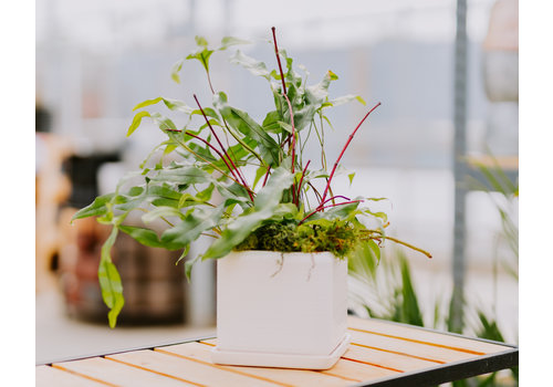 Sept 25th 4:00pm - Make + Take Class  - Best Ferns Forever