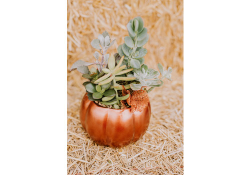 Oct 23rd 11am - Make + Take Class  -Spooktacular Succulents