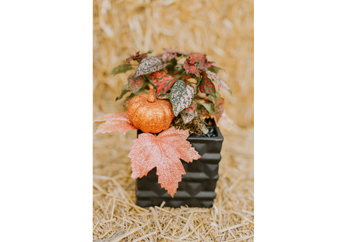 Oct 30th 11am - Make + Take Class  - Pumpkin Spice & Everything Nice