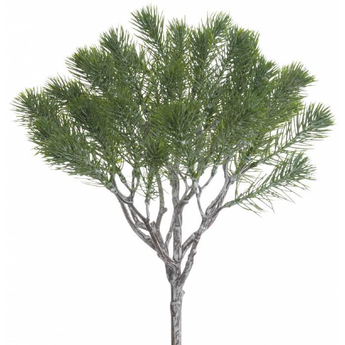 """Pine Bush 13"""""""