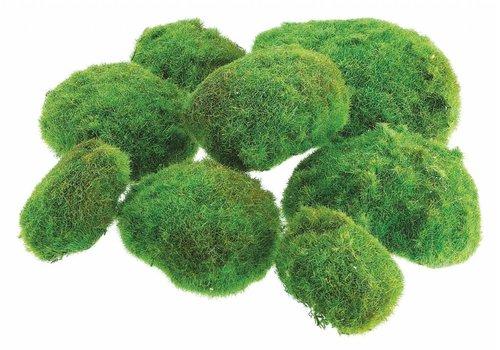 """Moss Ball Large 12"""""""