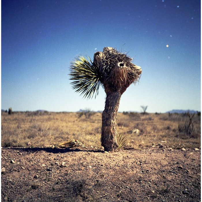 Alex Marks 'Yucca'