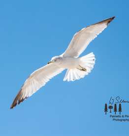 Art Segal in Flight Print by Palmetto & Pines Photography