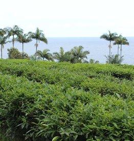 Service Tea Cupping / Tasting Onomea Tea Company