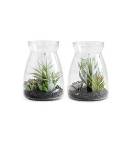 ASST SUCCULENTS IN GLASS JAR