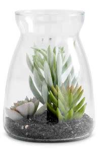 ASST SUCCULENTS IN GLASS JAR