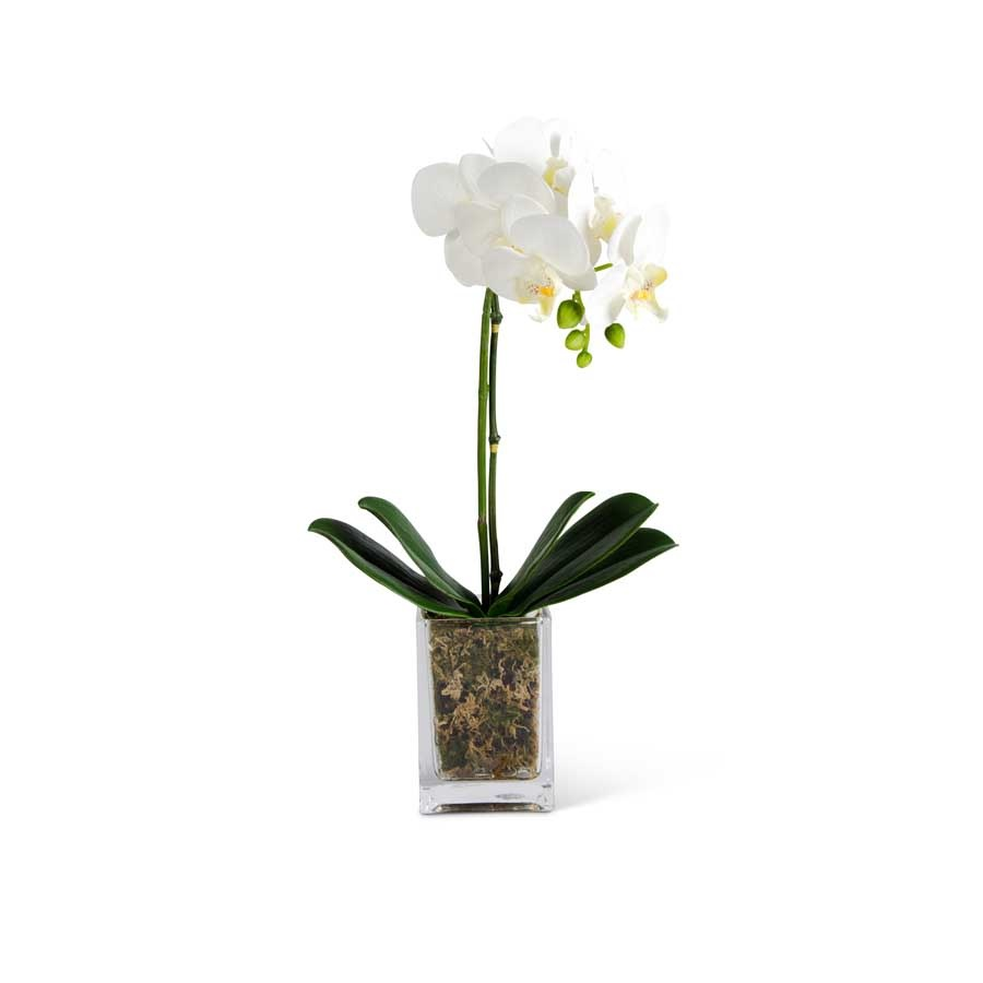 """WHITE ORCHID IN GLASS 17"""""""