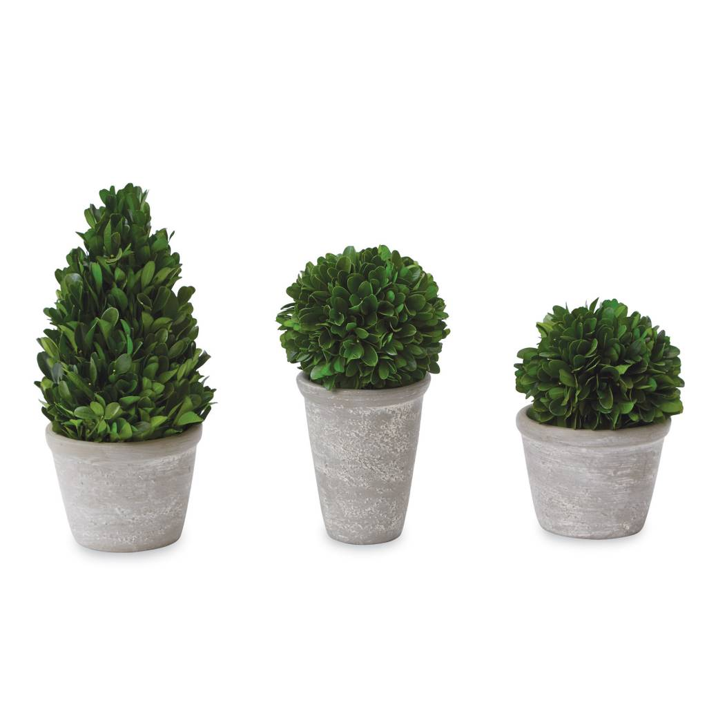 MUD PIE SMALL PRESERVED BOXWOOD TOPIARIES