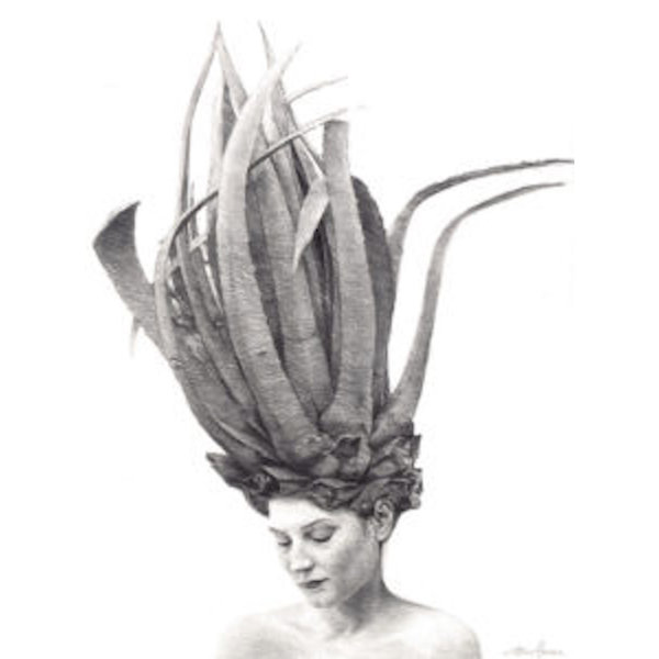 MAY AGAVE 36x26.75 Edition #4