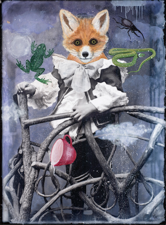 FOX DIVINING