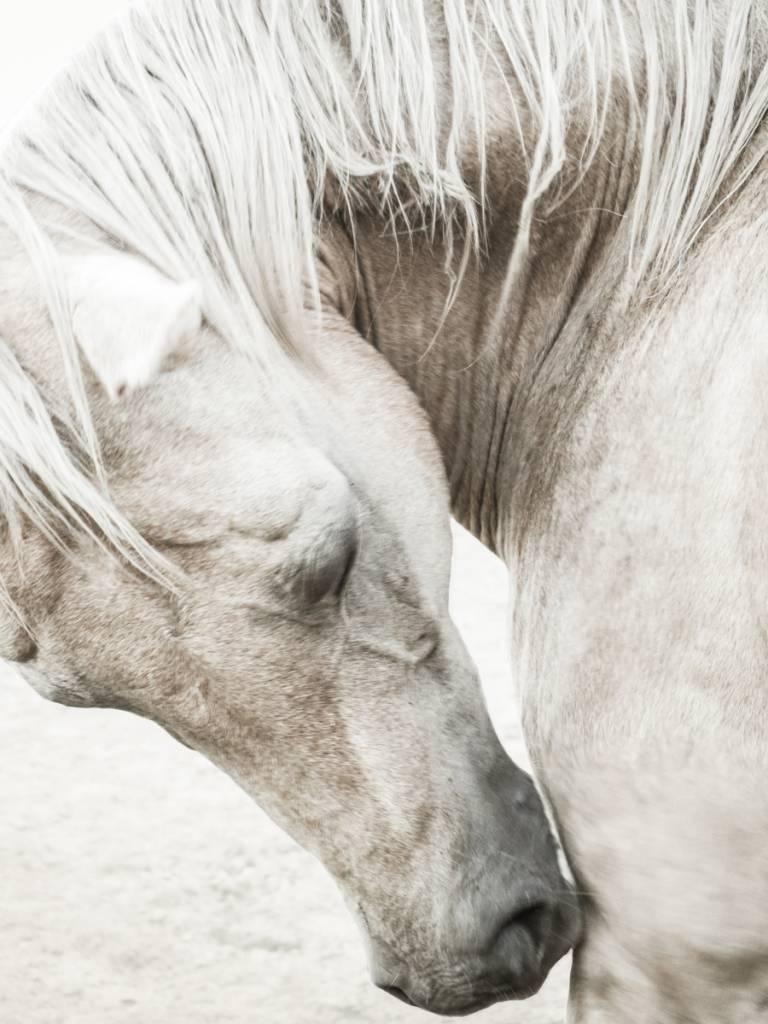 Horse Study II (#7)