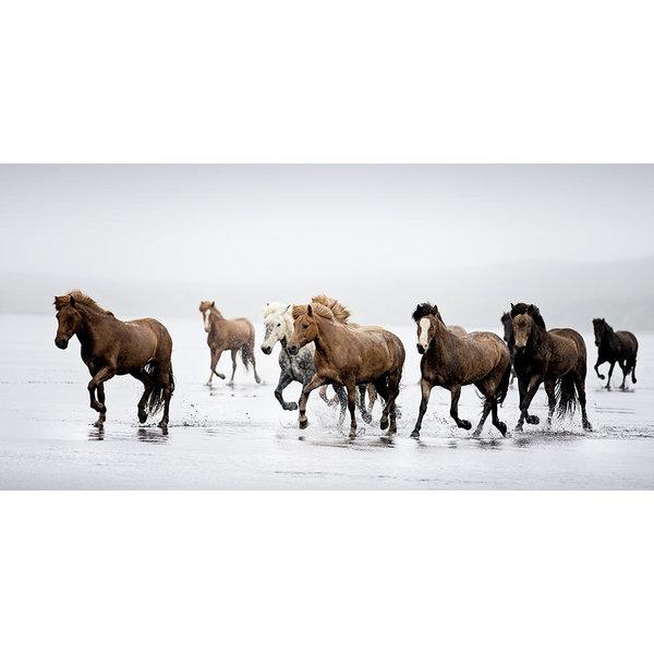 ICELAND EQUINE 7536