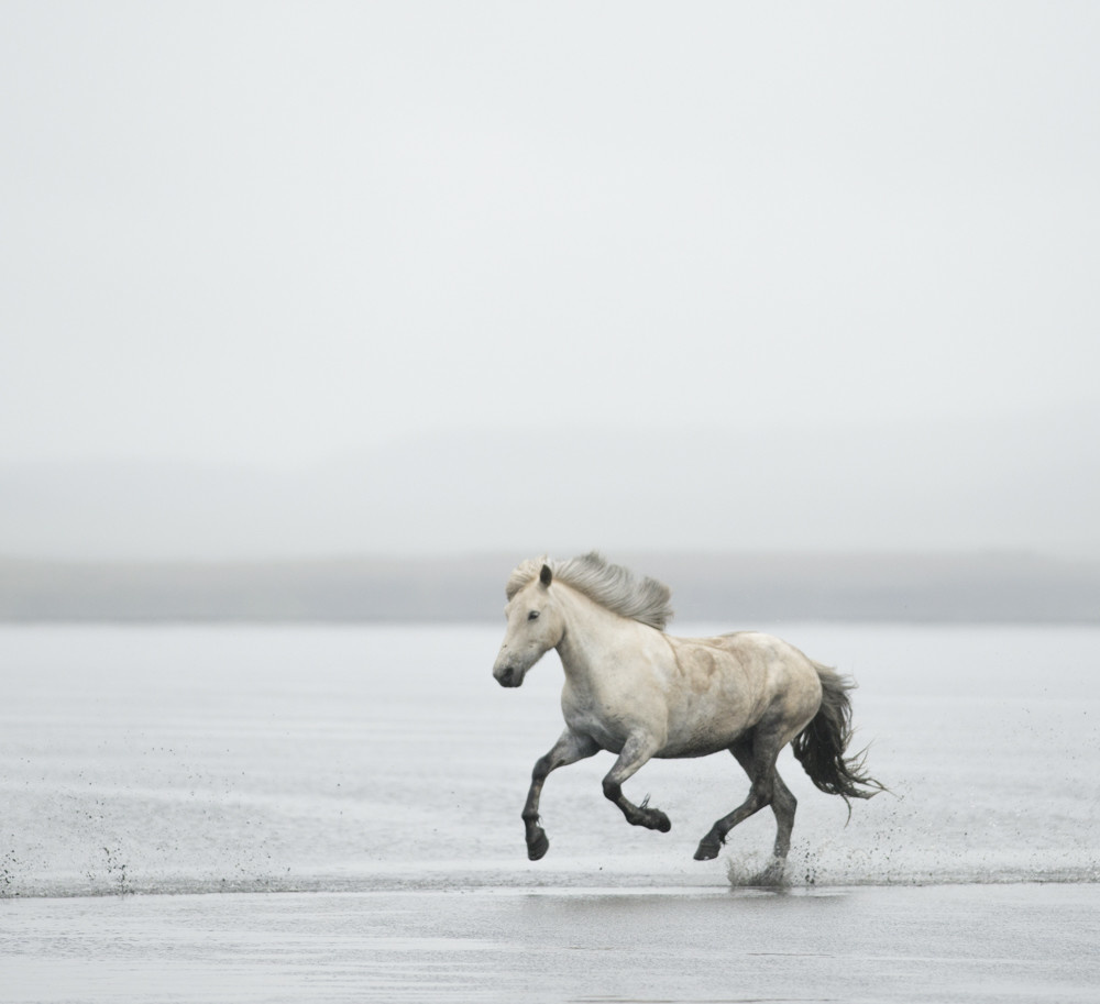 ICELAND EQUINE 7593
