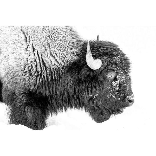 Bison Side Profile