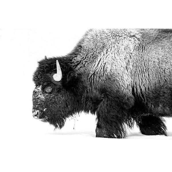 Bison Side Profile II