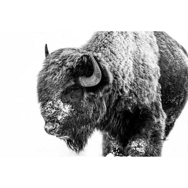 Stoic Bison II