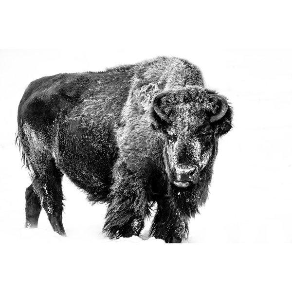 Portrait Bison II