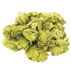 Brewmaster Saaz Whole Hops 2 OZ (Czech)