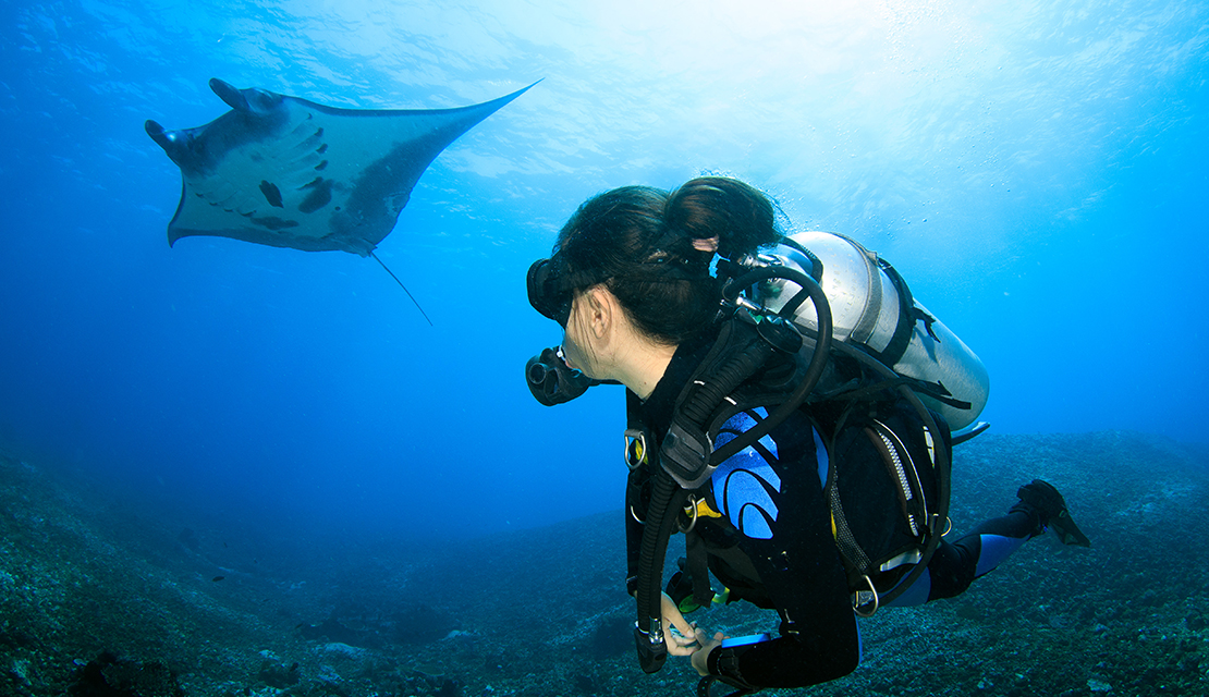 Manta ray with scuba diver