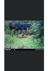 Rack Stacker Moose Sulfur 7lb