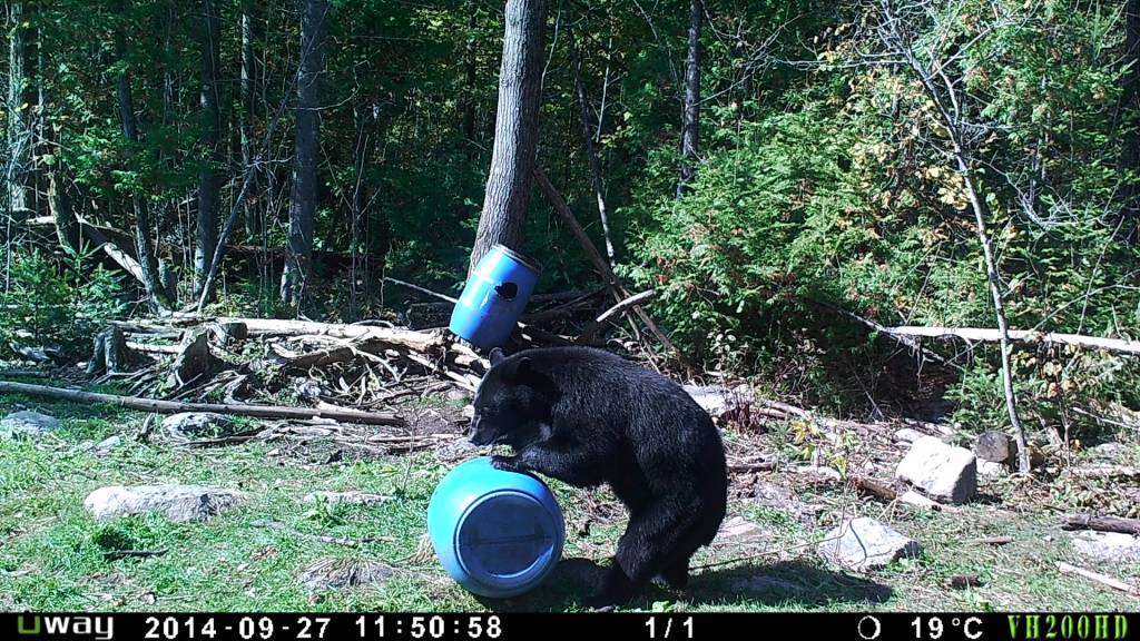Rack Stacker Black Bear Munchies w added sugar 40lb