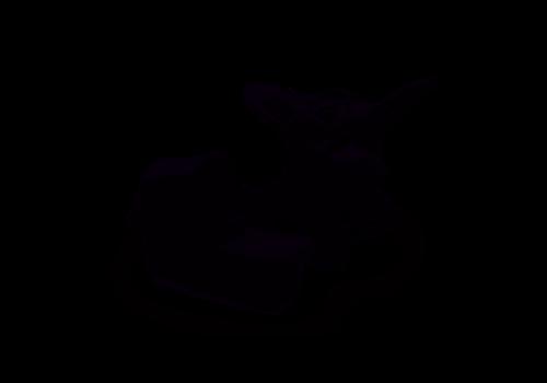 Bugaboo Bugaboo Donkey3 Mineral Mono Complete Black/Washed Black