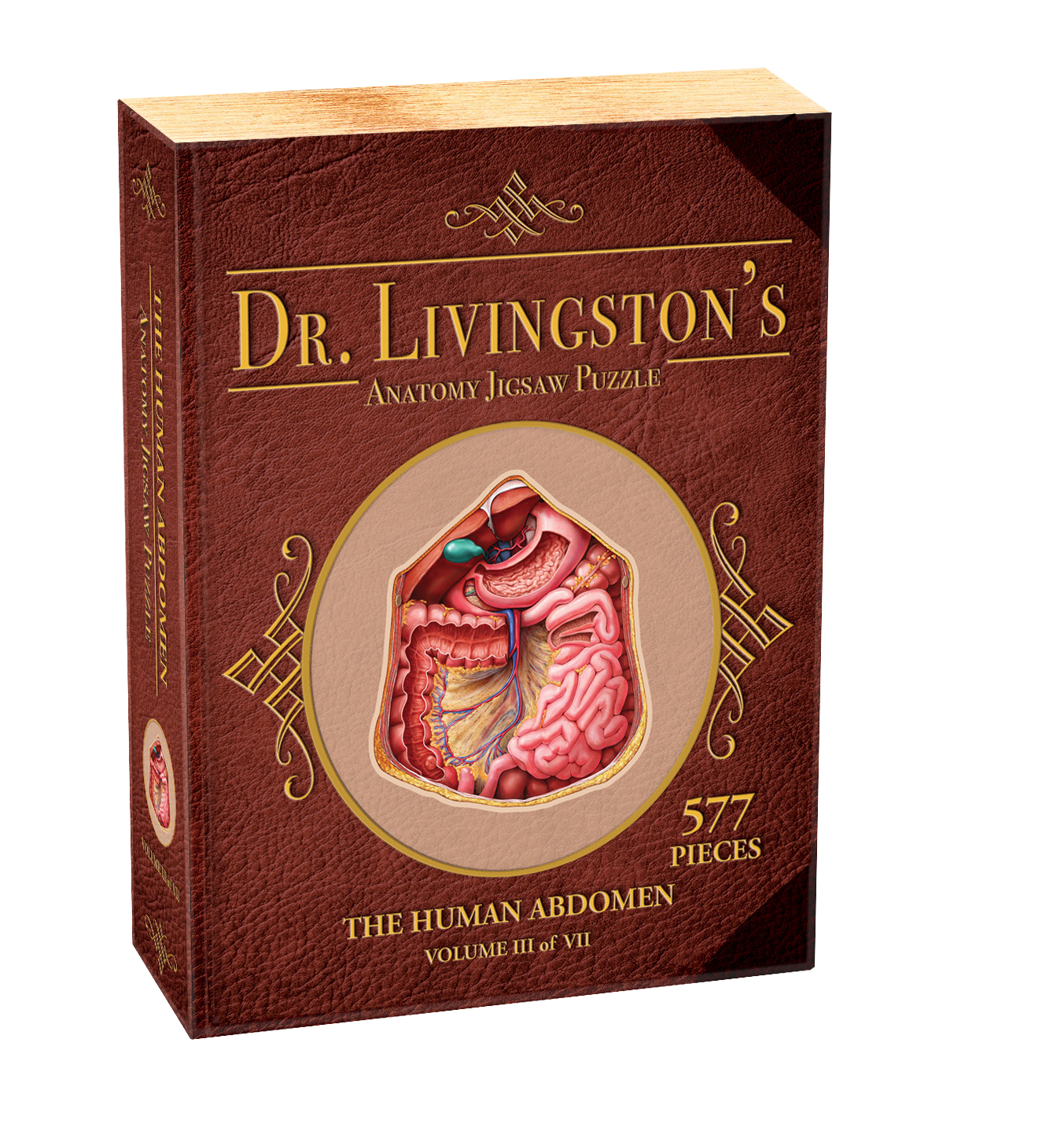 Human Abdomen - Dr. Livingston's Anatomy Puzzle (577 pc)