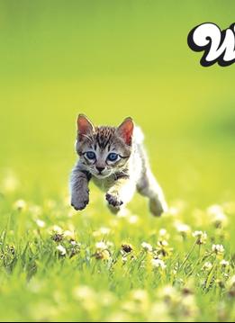Playmat: Kitten