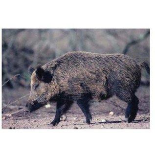 Delta TGT-Face- Delta Photo Animal Target Boar Pig 70615 Ea