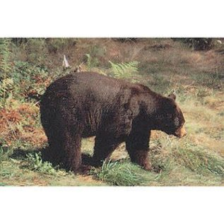 Delta TGT-Face- Delta Photo Animal Target Black Bear 70520 Ea