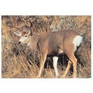 Delta TGT-Face- Delta Photo Animal Target Muldeer 109 Ea
