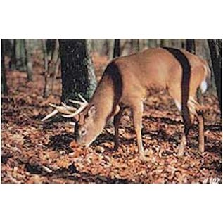 Delta TGT-Face- Delta Photo Animal Target Feeding White Tail 5059Ea
