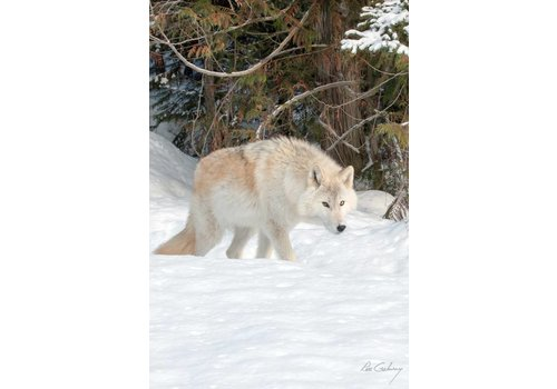 Wolf Print 16 x 24''