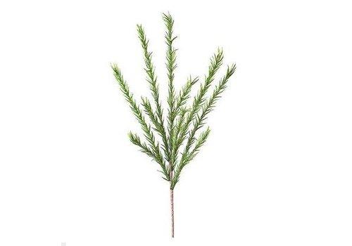 Desert Pine Stem - Green
