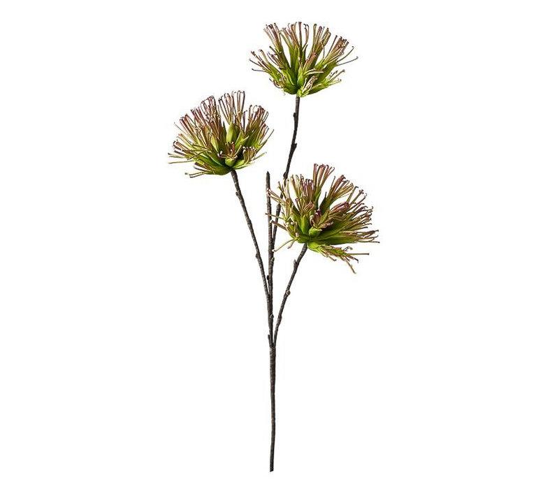 """Desert Fringe 3 Bloom 47"""" Stem"""