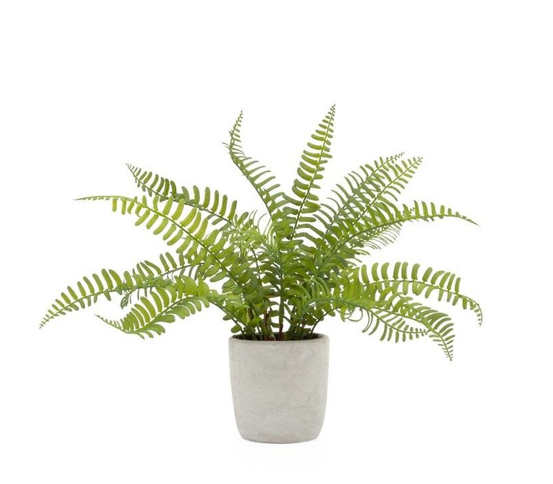 "Solero Round Potted Plant Boston Fern 3.5""D"