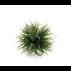 Grass Ball Medium 5''