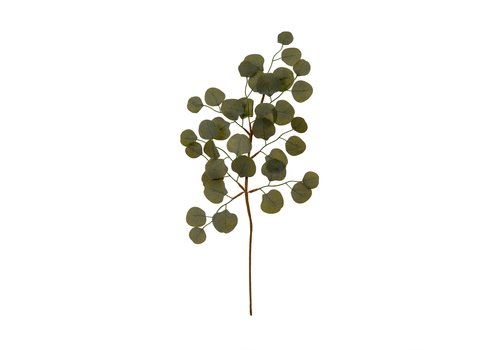Eucalyptus Sprig Green