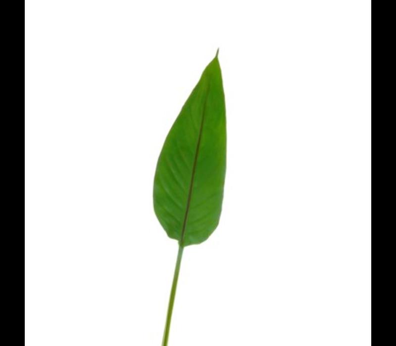 Bird of Paradise Leaf Small