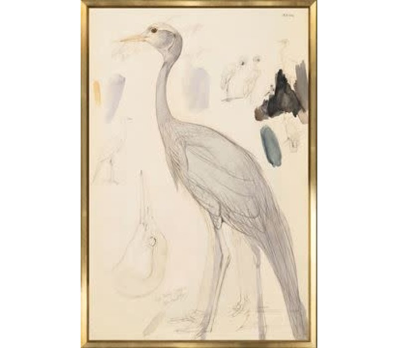 Lear Demoiselle Crane 16x24